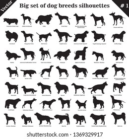 Big set of 49 different dogs, hounds, working, shepherd, terrier, companion, hunting. Vector set of dogs standing in profile. Isolated dogs breed silhouettes set in black color on white background. №1