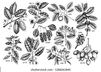 Big Set of botanical elements - flowers, plants, fruits, beans, nuts, leaves.  Hand drawn exotic, tropical plants collection. Wild and garden trees set. Vector illustrations.