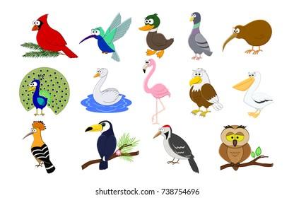 Big set of cartoon  birds.  Birds collection. Vector illustration. Duck, flamingo, cardinal, peacock, owl, woodpecker, hoopoe, swan, eagle, toucan, pelican,pigeon, kiwi. Preschool education.