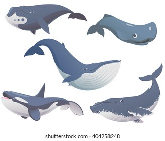 Big set of cartoon cute and funny whales, sea animals set, sea creatures collection, vector illustration of blue whale, killer whale, sperm whale, bowhead whale and humpback whale