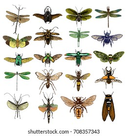 Big set of color insects, bugs, beetles, fly, bees, fleas. Many species in coloured vintage old hand drawn stippling and hatching, shading style. Engraved stipple woodcut. Vector.