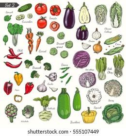 Big set of colored vegetables in sketch style.Vector illustration for your design
