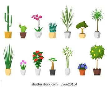 Big set of decorative house plants with pot isolated. interior plant, vector, flat icon design. Cactus, orchid, aloe, palm, yucca, crassula, tulip flower, anthurium, baobab tree, bamboo, lemon plant.
