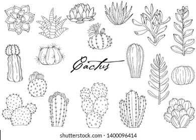 Big set of elements with hand drawn cacti on white background. Vector icons in black and white sketch style. Hand drawn isolated objects