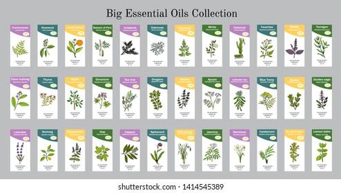 Big set of essential oil labels. Hand drawn vector illustration