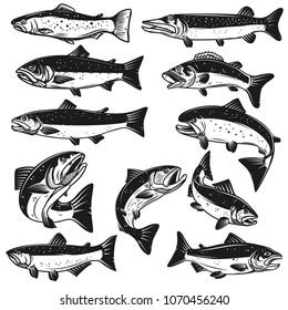 Big set of fish illustrations. Pike, salmon, trout, perch. Design elements for fishing logo, label, emblem, sign. Vector illustration