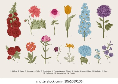 Big set flowers. Victorian garden flowers. Classical botanical vintage illustration.