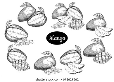 Big set fresh mango . Hand drawn sketch style tropical summer fruit vector illustration. Isolated drawing on white background. Vitamin and healthy fruit eco food. Farm market produce.