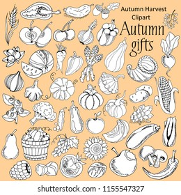 Big set of hand drawing autumn harvest, pumpkins and other farm food, black and white vector illustration