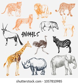 Big set of hand drawn sketch style African animals with tiger isolated on white background. Vector illustration.