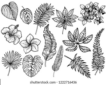 Big set of hand drawn sketch style tropical plants isolated on white background. Vector illustration.