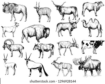 Big set of hand drawn sketch style ungulates isolated on white background. Vector illustration.