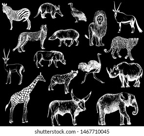 Big set of hand drawn sketch style wild animals isolated on black background. Vector illustration.