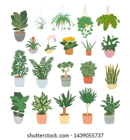 Big set of houseplants isolated on white background. Collection for home garden. Vector illustration.