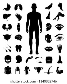 Big set of human anatomy. Body parts icons on white background. Vector art.