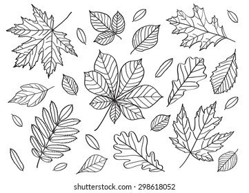 A big set of images of leaves of different trees. Hand drawing. Black and white image. Sketch, design elements. Vector.