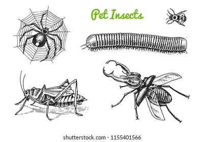 Big set of insects. Bugs Beetles Tattoo, Spider, Worm Centipede Locusts Bee. Lucanus cervus, Julida. Vintage Pets in house. Engraved Vector illustration.