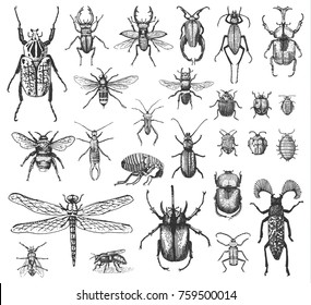 big set of insects bugs beetles and bees many species in vintage old hand  drawn style