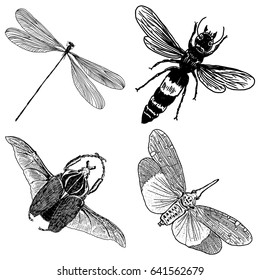 Big set of insects, bugs, flying beetles. Many species in vintage old hand drawn stippling and hatching, shading style. Engraved stipple woodcut. Vector.