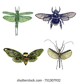 Big set of insects, bugs, flying beetles in color. Many species in colourful vintage old hand drawn stippling and hatching, shading style. Engraved stipple woodcut. Vector.