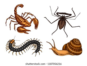 Big set of insects. Vintage Pets in house. Bugs Beetles Scorpion Snail, Whip Spider, Scolopendra. Engraved Vector illustration
