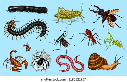 Big set of insects. Vintage Pets in house. Bugs Beetles Scorpion Snail, Whip Spider, Worm Centipede Ant Locusts, Mantis Bee. Amblypygi, Lucanus cervus, Scolopendra Julida. Engraved Vector illustration
