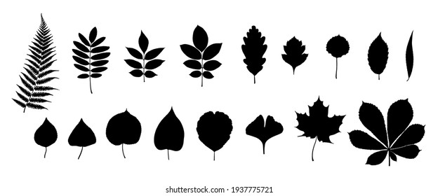 Big set of leaf silhouettes. Isolated shapes on white background. Collection of leaves of fern, maple, chestnut, birch, rowan, oak, willow, lilac, aspen, ash, ginkgo biloba. Stock vector illustration