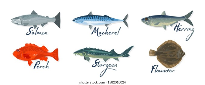 Big set with marine fishes and lettering salmon, mackerel, perch, herring, sturgeon, flounder. Raw, salted, marinated or smoked seafood. Vector cartoon illustration isolated on white background.