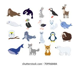 Big set of north animals. Cartoon arctic animals collection. Albatross, fur-seal, hare, eider, owl,ermine, fox, white whale, grampus, musk ox, walrus, reindeer, penguin, puffin, lynx, bear, wolf.