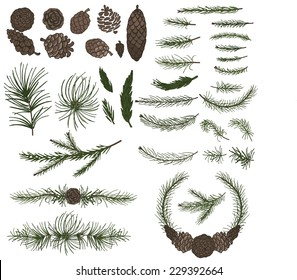 Big  set with pine,spruce branches ,cones,group,border.Modern flat decor elements for invitations,print,feb,card,banner. Christmas festive vector,nature illustration.