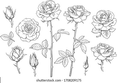 Big set of rose flowers, buds, leaves and stems in engraving style. Hand drawn realistic open and unblown rosebuds. Decorative vector elements for tattoo, greeting card, wedding invitation.