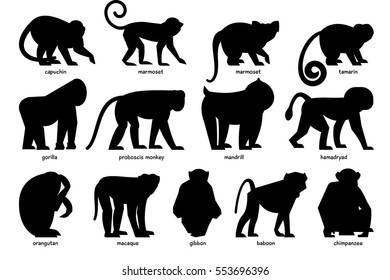 Big set of silhouettes of different Monkeys