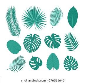 Big set of tropical leaves. Sketch, floral elements for your design. Vector illustration.