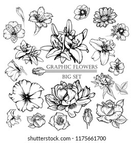 Big set of vector ink flowers illustration: lily, poppy, peony, rose, petunia, chamomie, alstroemeria