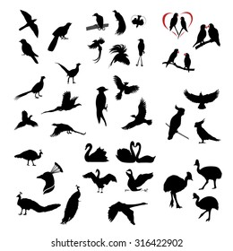 The big set of vector wild birds silhouettes and icons. Illustations of flying birds.