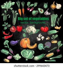 Big set of vegetables. Vector illustration in vintage style on chalkboard background.