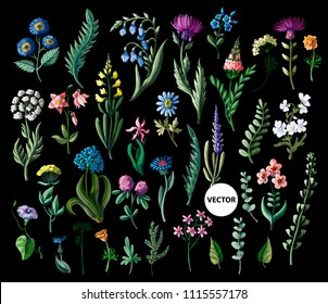Big set of wild flowers isolated. Vector