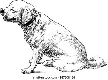 Dog Sketch Images Stock Photos Vectors Shutterstock