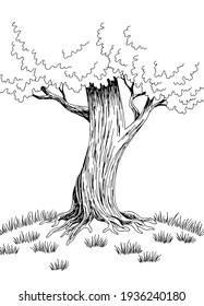 Big tree graphic art black white landscape sketch vertical illustration vector