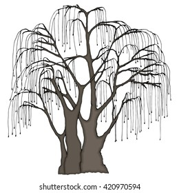Big tree with long hanging twigs. Weeping willow or other. Color vector illustration.