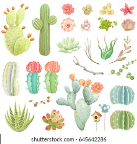 Big vector collection with flowers, cacti, branches and succulents.