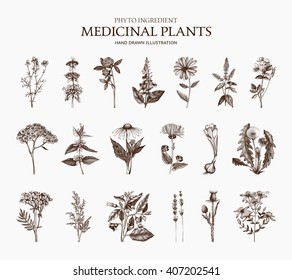 Big Vector Collection of hand drawn Spices and Herbs. Botanical  illustration. Vintage Medicinal and Poisonous Plants sketch set isolated on white