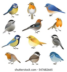 Big vector set of different wild colorful isolated birds