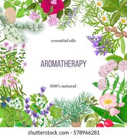 Big vector set of popular essential oil plants. Ornament with text. Rose, Geranium, lavender, mint, melissa, Chamomile, cedar, pine, juniper, rosehip etc. For cosmetics, spa, health care, aromatherapy