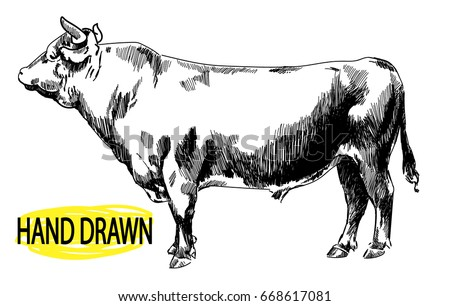 Cow Drawing By Hand In Vintage Style Childrens