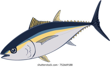 Bigeye Tuna illustration
