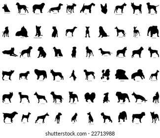 Biggest Set of Dogs  Silhouettes in Different Poses with Breeds Description. Almost Each Kind of Dog Animal Represented in set. High Detail, Very Smooth. Vector Illustration.