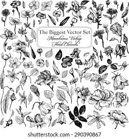 The biggest vintage vector floral set of isolated elements in Victorian style, flowers and buds, leaves and branches, ink drawing, imitation of engraving, hand drawn design natural collection