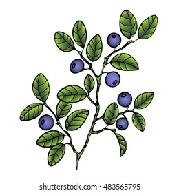 Bilberry. Branch blueberry leaves and berries. Forest painted berry, cartoon. Vector illustration