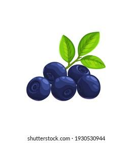 Bilberry fruit with green leaves isolated icon of fresh forest blueberry berries. Vector food and fruit drinks design, huckleberry or whortleberry blue berries with leaf, organic natural food dessert